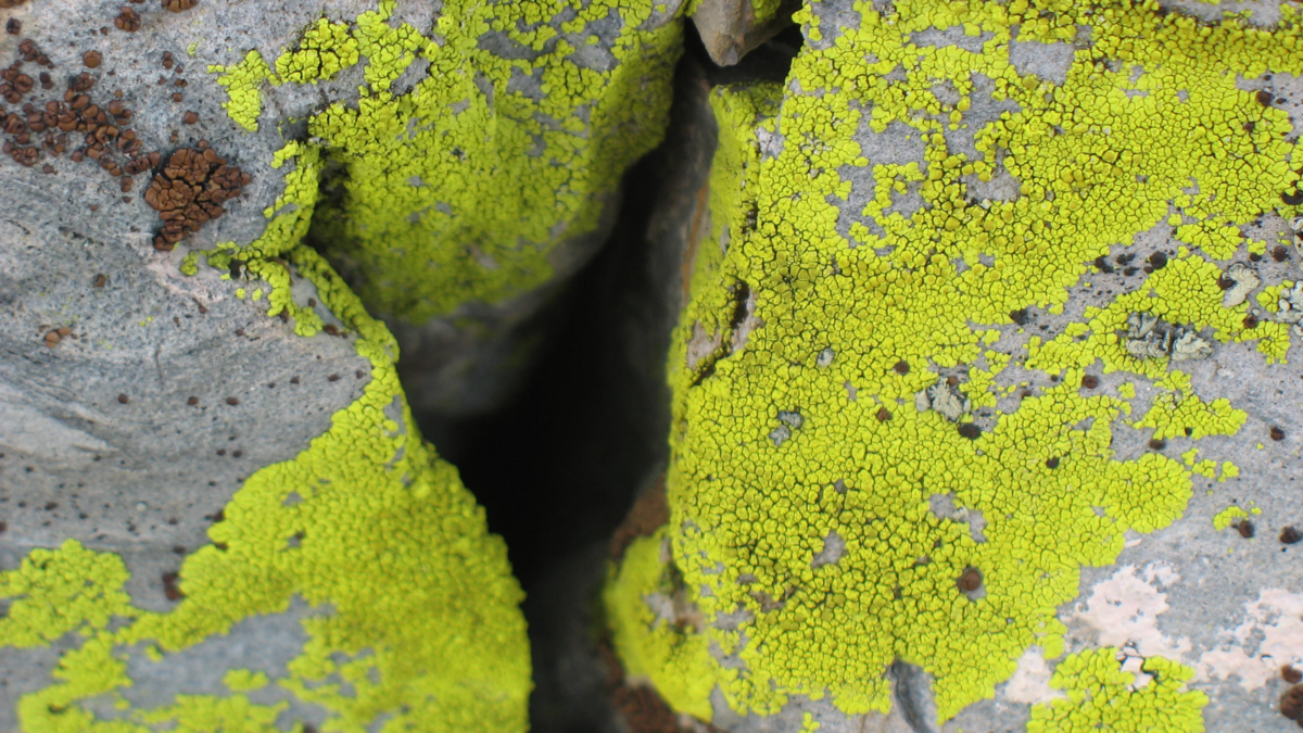Lichen-covered granite in Yosemite National Park. Photo by Ben Young Landis.