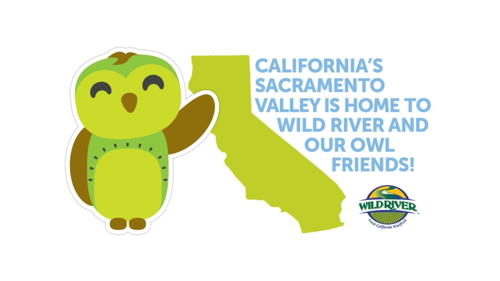 "Our Owl Friends and associated kiwi owl logos are trademarks of Wild River Marketing Inc. Designed by Ben Young Landis and Guy Rogers. The banner shows a cartoon owl, which has dark wings and a green belly with spots that mirror the seeds and cross section of a kiwifruit. The owl is pointing to a silhouette of the State of California, and the words ""California's Sacramento Valley Is Home to Wild River and Our Owl Friends!"""